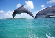 海豚图片_31张