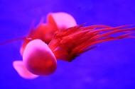 美丽的水母图片_10张