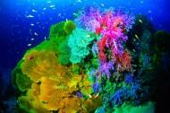 美丽海底珊瑚图片_24张