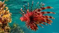 可爱热带鱼图片_8张