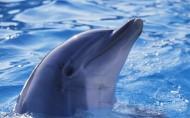 水生哺乳动物海豚图片_12张