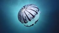 漂亮的水生动物水母图片_15张
