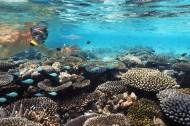 有趣的海底世界图片_15张
