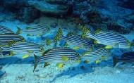 海底鱼群图片_31张