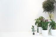 公司前台绿叶植物摆放装饰图片_10张