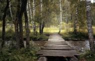木质结构的桥图片_15张