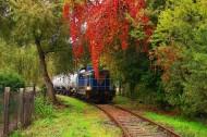 穿过秀丽风景的观光火车图片_23张