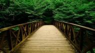 丛林中的木桥图片_22张