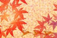 卡通动植物背景图片_30张