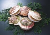 海鲜贝壳图片_24张