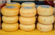 荷兰奶酪图片_16张