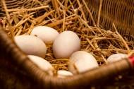 鸡蛋摄影图片 _8张