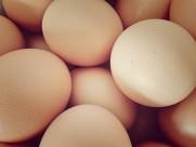 鸡蛋特写图片_18张
