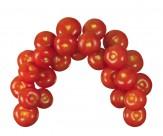 番茄图片_22张