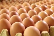鸡蛋图片_11张