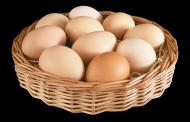 蛋类透明背景PNG图片_15张