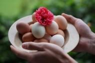 新鲜的鸡蛋图片_14张