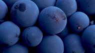 美味的蓝莓图片_7张