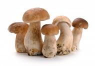 可食用蘑菇图片_12张