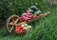 蔬菜丰收图片_71张