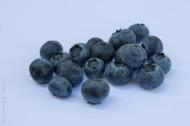 小巧的蓝莓图片_15张