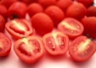 西红柿图片_26张