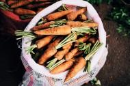新鲜的胡萝卜图片_11张