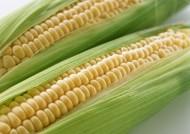 玉米图片_4张