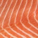 鱼肉类背景图片_26张