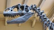 古老的恐龙化石图片_20张