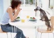 人和宠物狗狗生活图片_57张