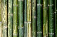 成排的竹子背景素材图片_15张
