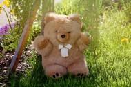 可爱的玩具熊图片_15张