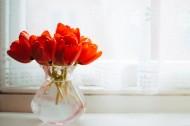 透明的花瓶图片_11张