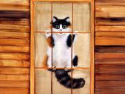 手绘猫咪可爱图片_54张