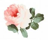 水墨花卉图片_235张