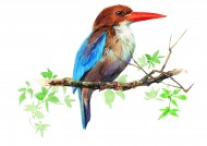 树枝上的鸟彩绘图片_15张