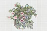 彩色素描花卉图片_8张