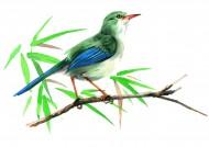 站立在树梢的鸟彩绘图片_15张