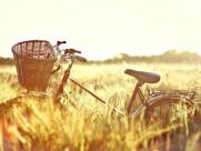 老式单车图片_5张