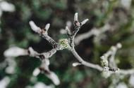 冰冻的树叶和树枝图片_14张