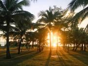 笔直的椰子树图片_11张