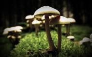 草地上的蘑菇图片_9张