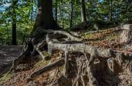 大树的根部图片_9张