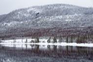 被大雪覆盖的松树林图片_13张