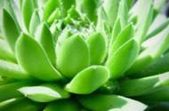 可爱漂亮的多肉植物盆栽图片_20张