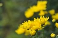 秋天花园里盛开的鲜花图片_16张