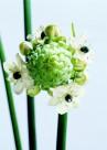 高清白色花朵图片_5张