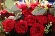 好看的红玫瑰花图片_14张