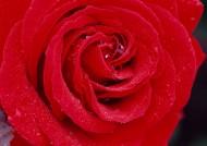 红色花朵花瓣背景图片_19张